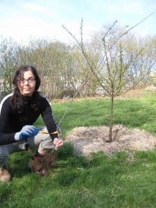 Susan Poizner in Ben Nobleman Park Community Orchard about to plant a new fruit tree.