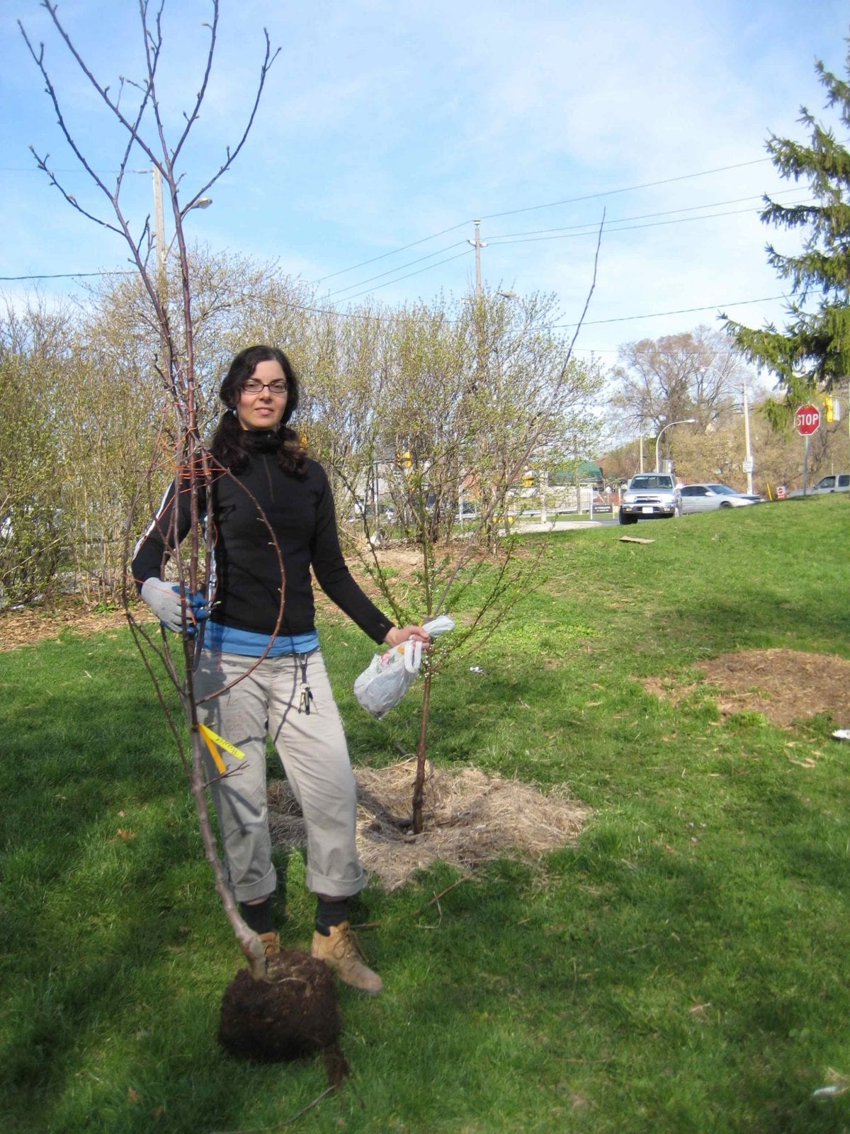 Resource List Find A Specialist Fruit Tree Nursery In Canada And The Usa