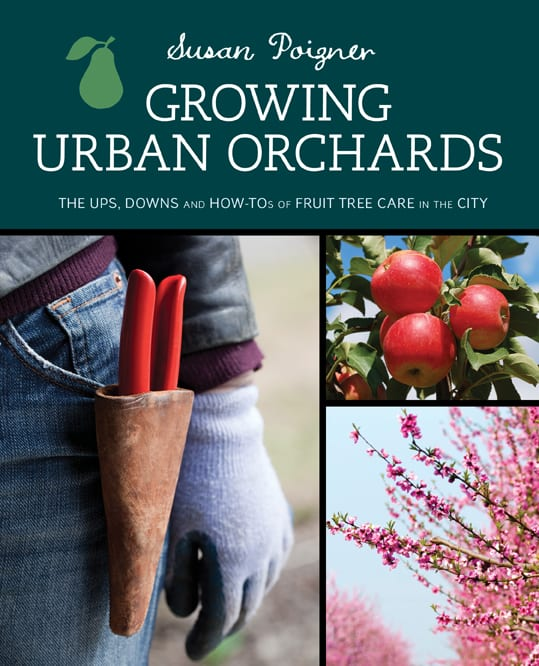 Cover Image Growing Urban Orchards, holster and pruners, apples on tree, fruit tree blossoms