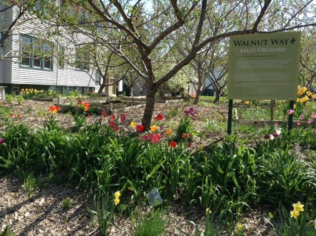 Walnut Way is a project that is transforming a community, one fruit tree at a time. Photo Credit: Walnut Way