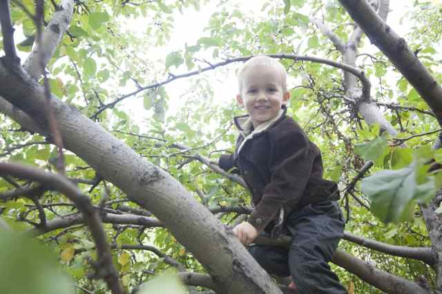 Boy climbs fruit tree in calgary