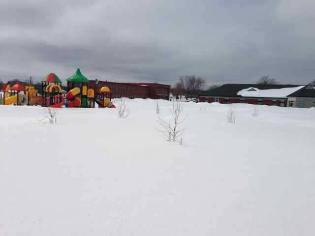 Newly planted school orchard in Tracadie-Sheila, New Brunswick. Photo Credit: Manon Losier