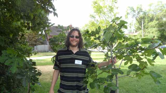 Growing Fig Trees in a Cool Climate