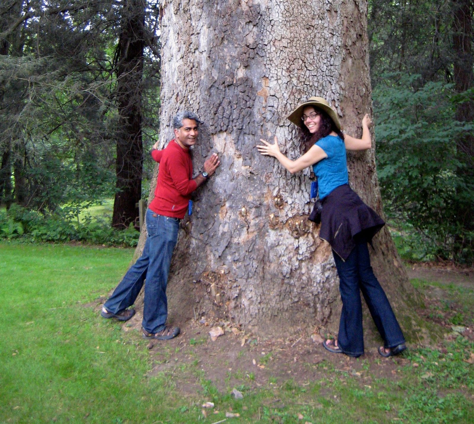 Why you should hug a tree today