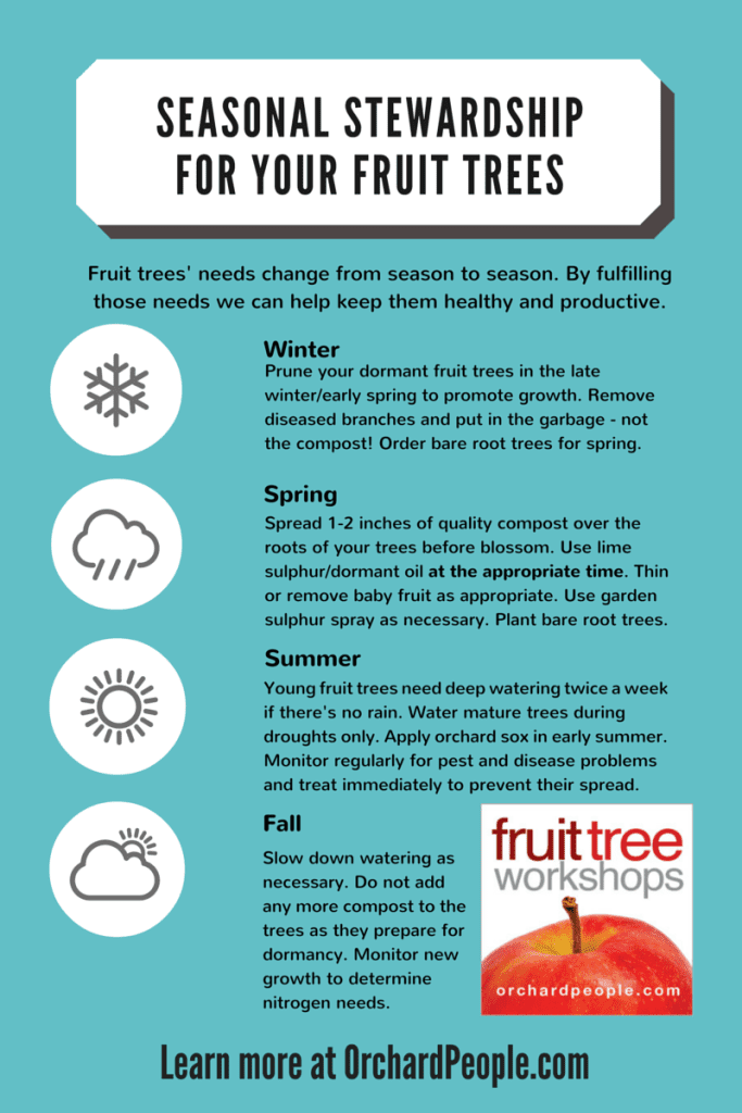 Seasonal Stewardship for your fruit trees
