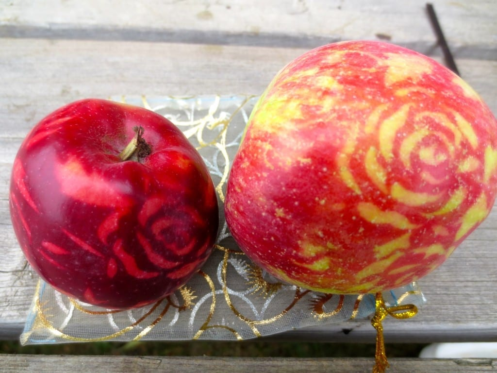 These apples were grown by the volunteers of the Daily Bread orchard in Ontario. How? Read on to find out!