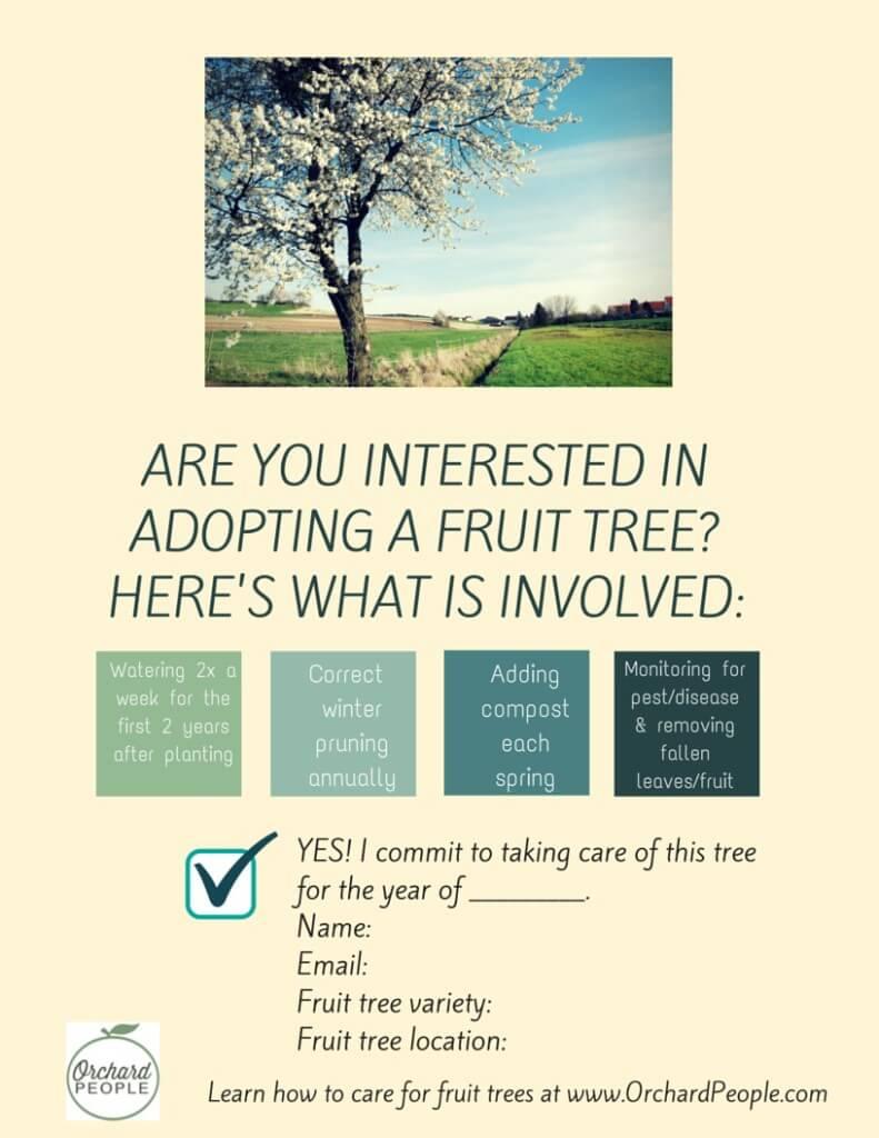Adopt a tree yellow