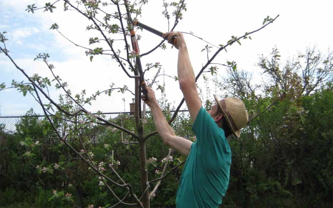 What's better…planting a small fruit tree whip? Or an older fruit tree?