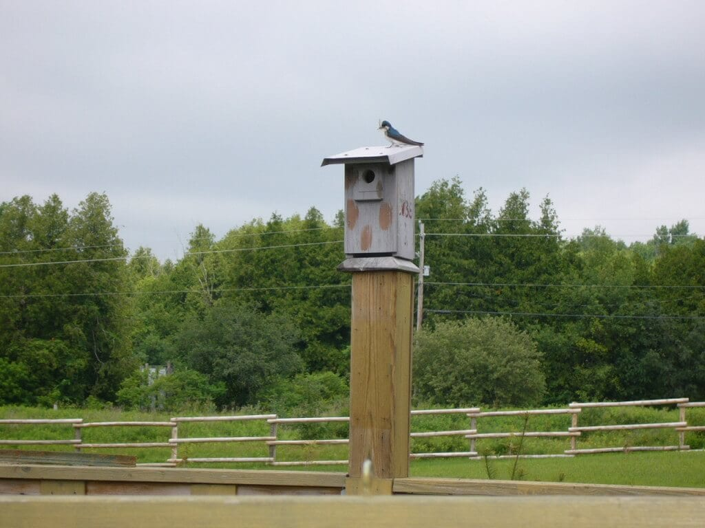 Mary Nelson's reclaimed birdhouse with a bluebird (Photo credit: Mary Nelson)