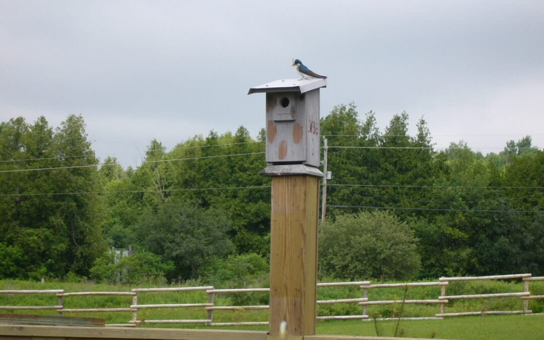 Can a birdhouse protect your fruit trees from insect infestation?