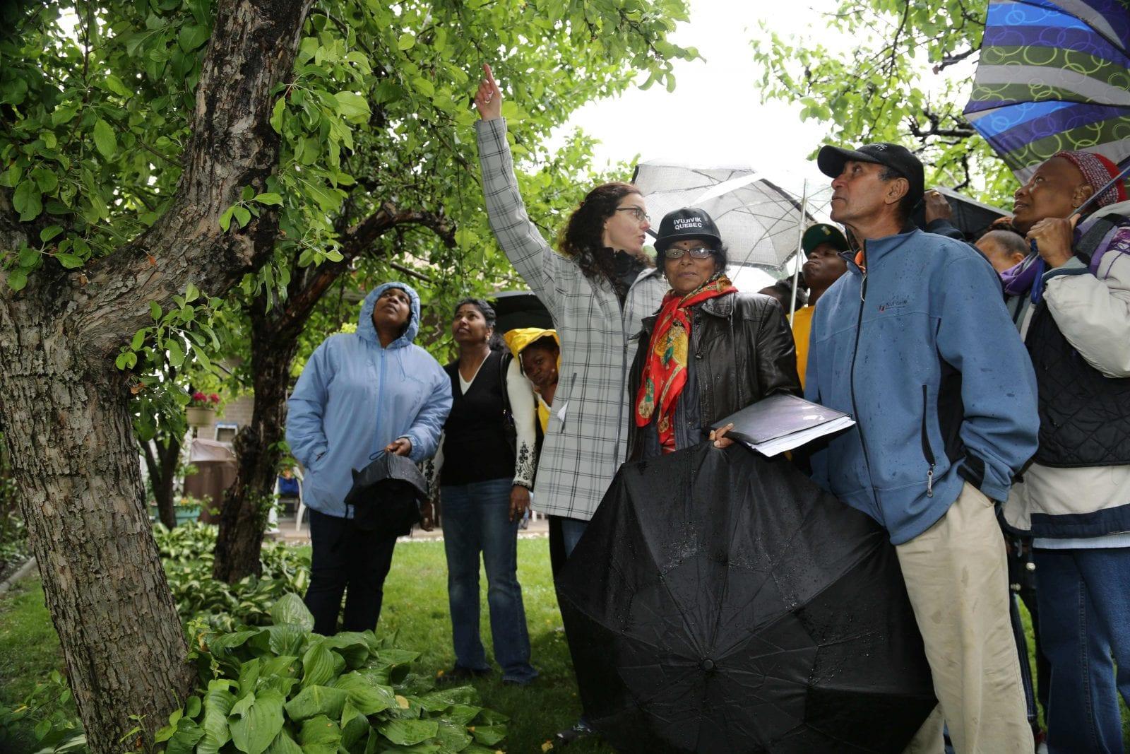 Teaching a fruit tree care workshop in Toronto