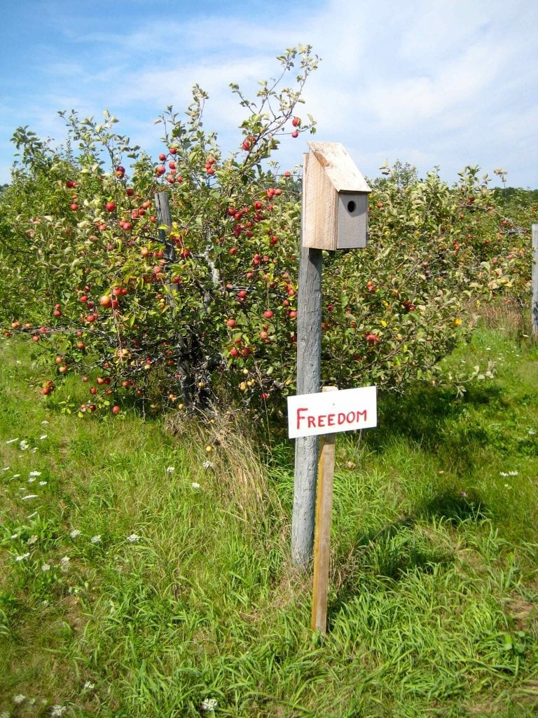 Orchard Birdhouse in Avalon Orchards in Ontario.