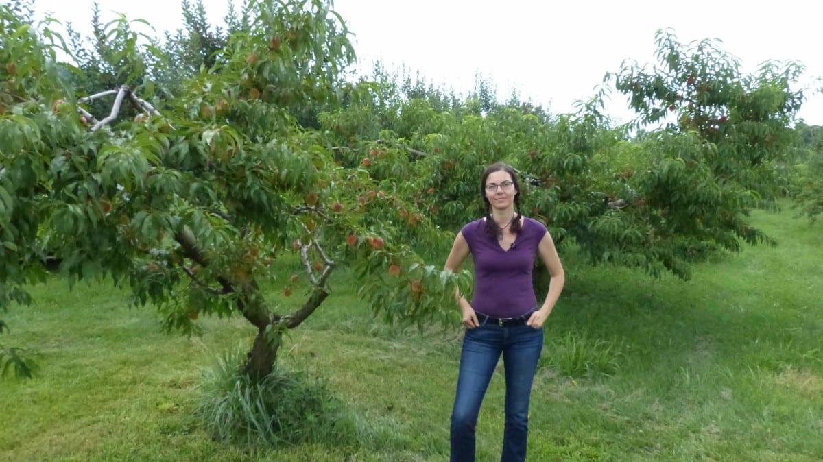 Orchard People Fruit Tree Care | Gardening Workshops Online