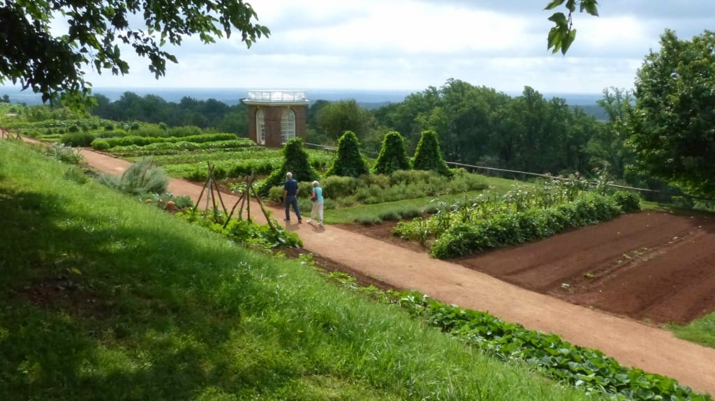 Behind the terraced vegetable garden at Monticello is the Fruitery, an orchard of exotic trees originally planted by Thomas Jefferson. Photo Credit: www.orchardpeople.com.