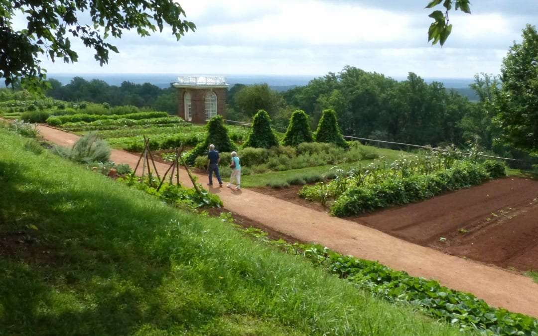 Exploring the Roots of American Pomology at Thomas Jefferson's Monticello
