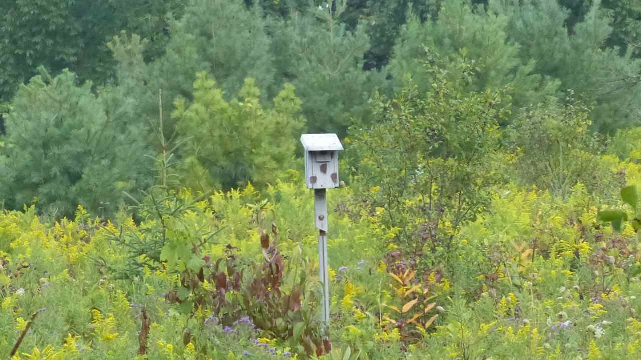 Birdhouse in the bush