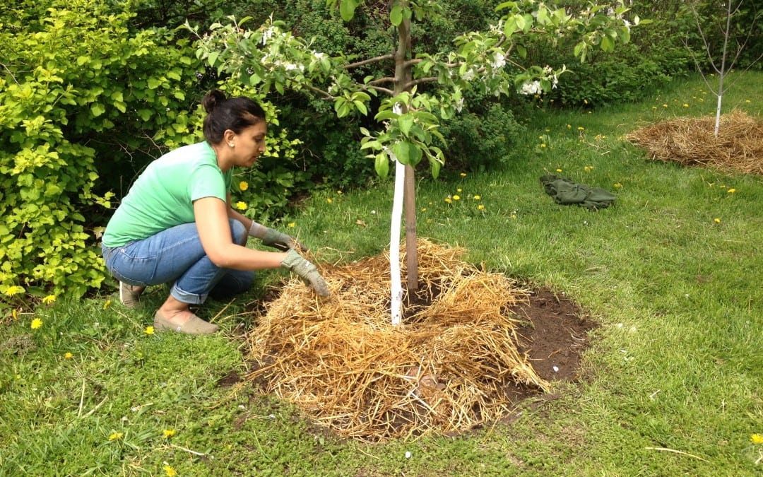 How To Prepare Fruit Trees For Winter