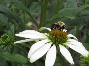 Integrating native plants and flowers into your orchard is one way to attract beneficial insects