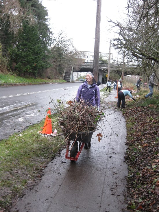 Wheelbarrow filled with Blackberries cleared from around the old orchard on the Burke-Goodman Trail (Photo Credit: City Fruit Seattle)