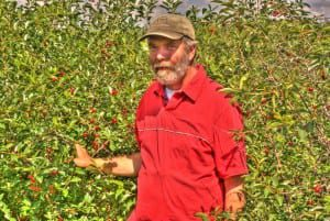 Dr Bob Bors of the University of Saskatchewan was on the team that developed and released the Romance series of shrub cherries that grow well in cold climates.