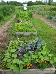 Garden plots at the rare Charitable Research Reserve's community gardens. Courtesy of D. Radoslav.