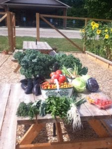 A small portion of one of the Flamborough Baptist Community Garden's past harvests. Courtesy of Flamborough Baptist Community Garden.