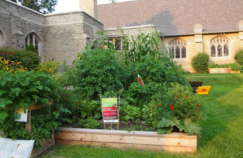 Photograph of a garden plot at the Morningside- High Park Community Garden. Courtesy of Gina McKenzie-Lodge