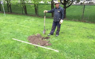 Bare Root Trees – When to Plant Them?