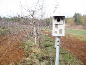 Good, practical birdhouses that receive regular maintenance are the best for attracting birds to your garden or orchard.
