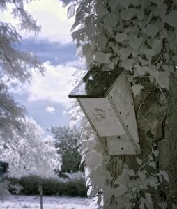 Bat boxes are easily constructed, and behave a lot like a birdhouse will - just for bats! Put them on a high pole or somewhere similar for best results. Photo from pixabay.com.