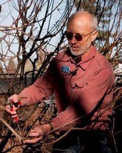 Chuck Ingels, Pomologist from Sacramento