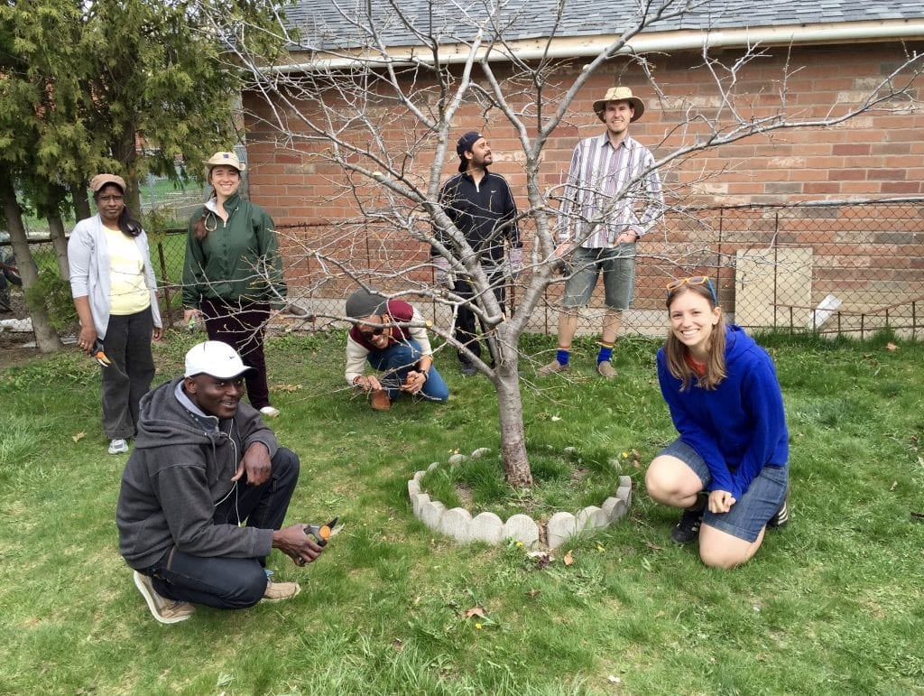 Many of the sessions in San Romanoway's Certificate in Fruit Tree Care took place in private gardens where the students learned how to prune trees of all ages.