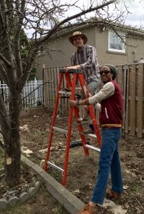 Two students prune a large fruit tree in a residential backyard