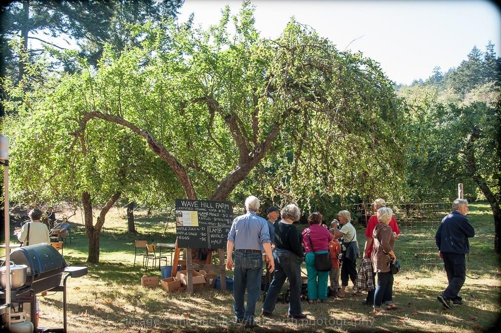 Orchard Tour in Salt Spring Island