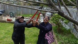 Chelliah and Kalanithy prune an older tree in Wilson's garden.