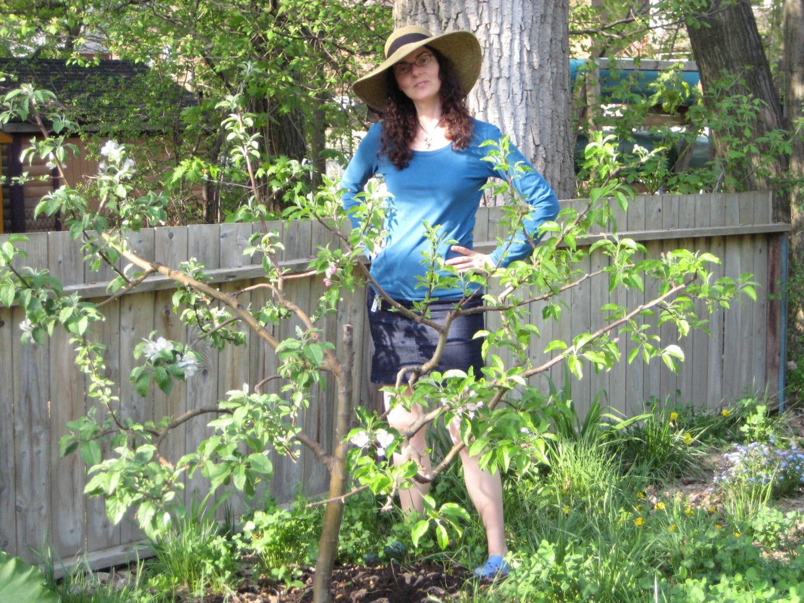 Using grafting techniques, breeders have developed many types of dwarfing apple trees that grow just 6 or 8 feet tall.