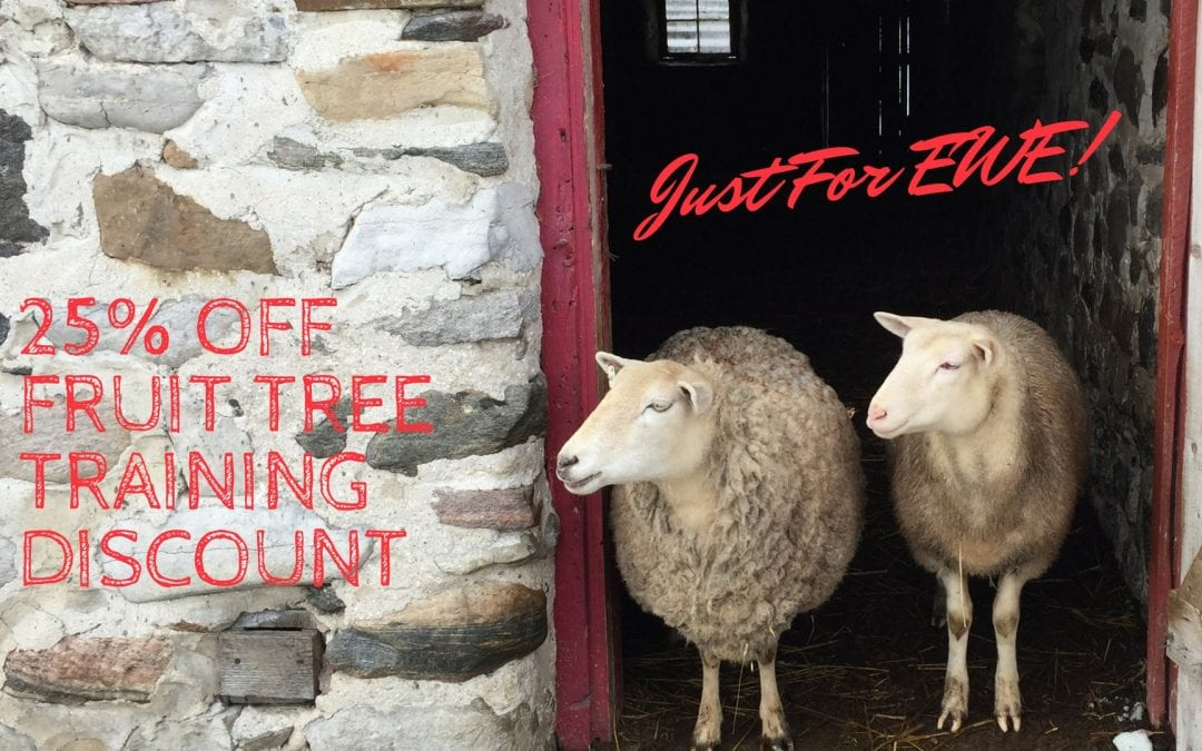 Holiday Discount – Just for Ewe!