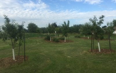 Red Deer Community Orchards Thrive With The Help of City Staff