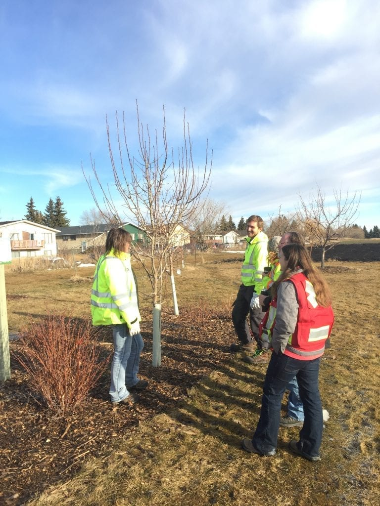 City staff inspect fruit trees in Red Deer Alberta community orchard | Community orchard projects