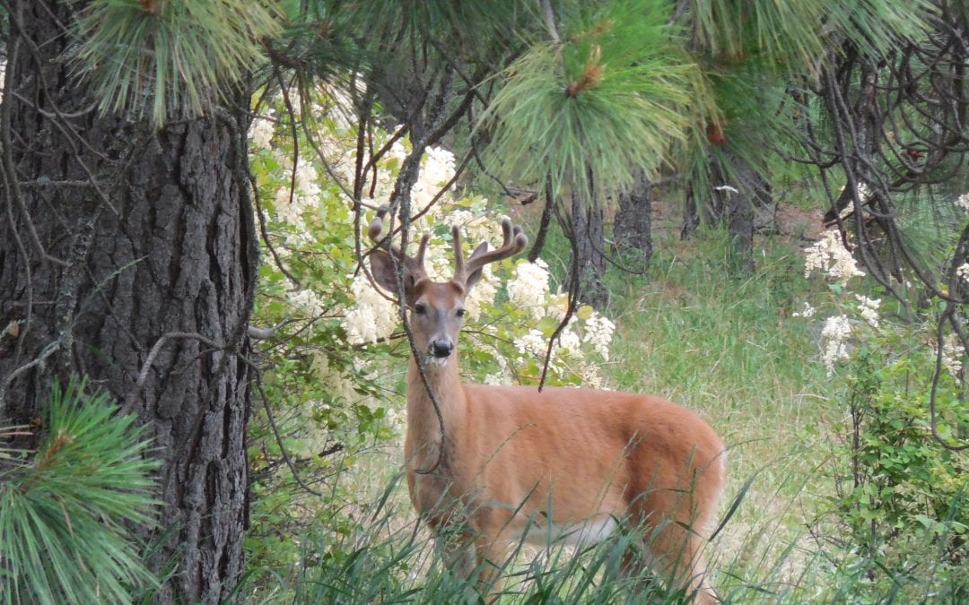Episode 22: Protecting Fruit Trees from Deer, Squirrels and other Critters