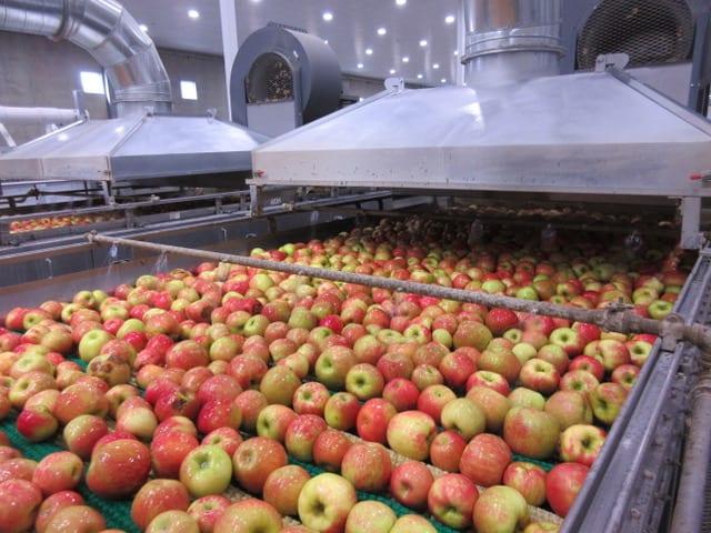 Episode 26: Apple Storage and Honeycrisp Challenges