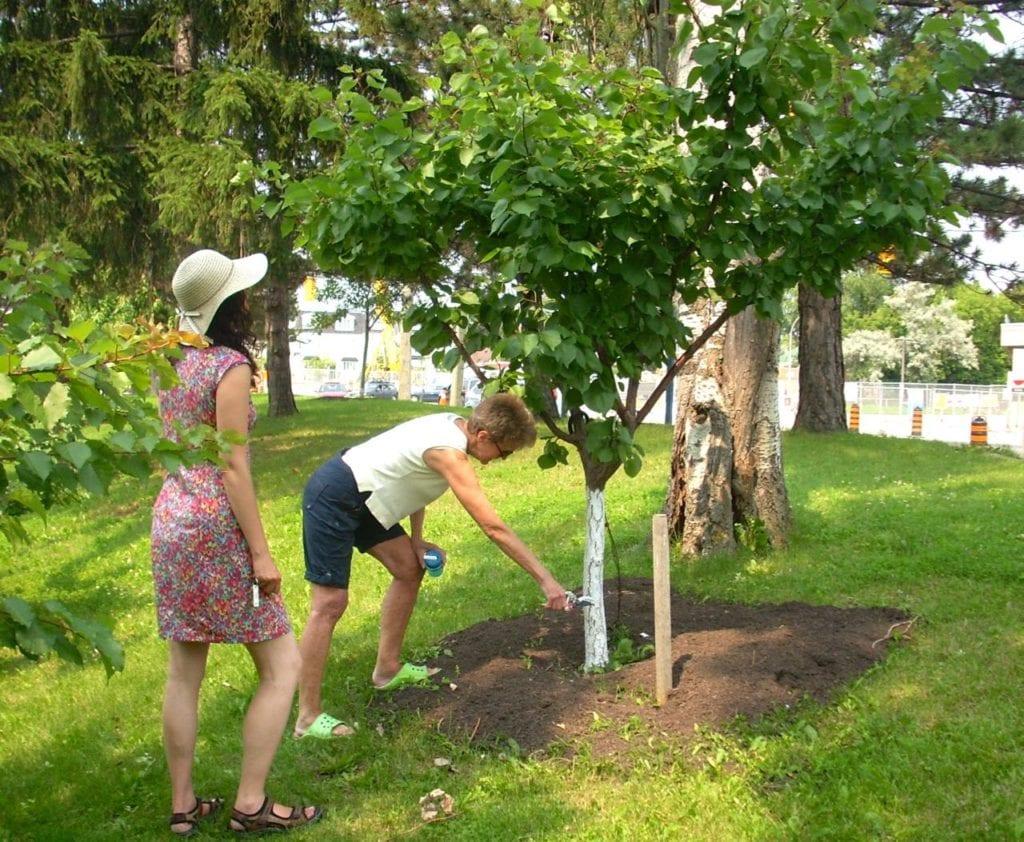 Volunteers inspect trees in Ben Nobleman Park Community Orchard in Toronto