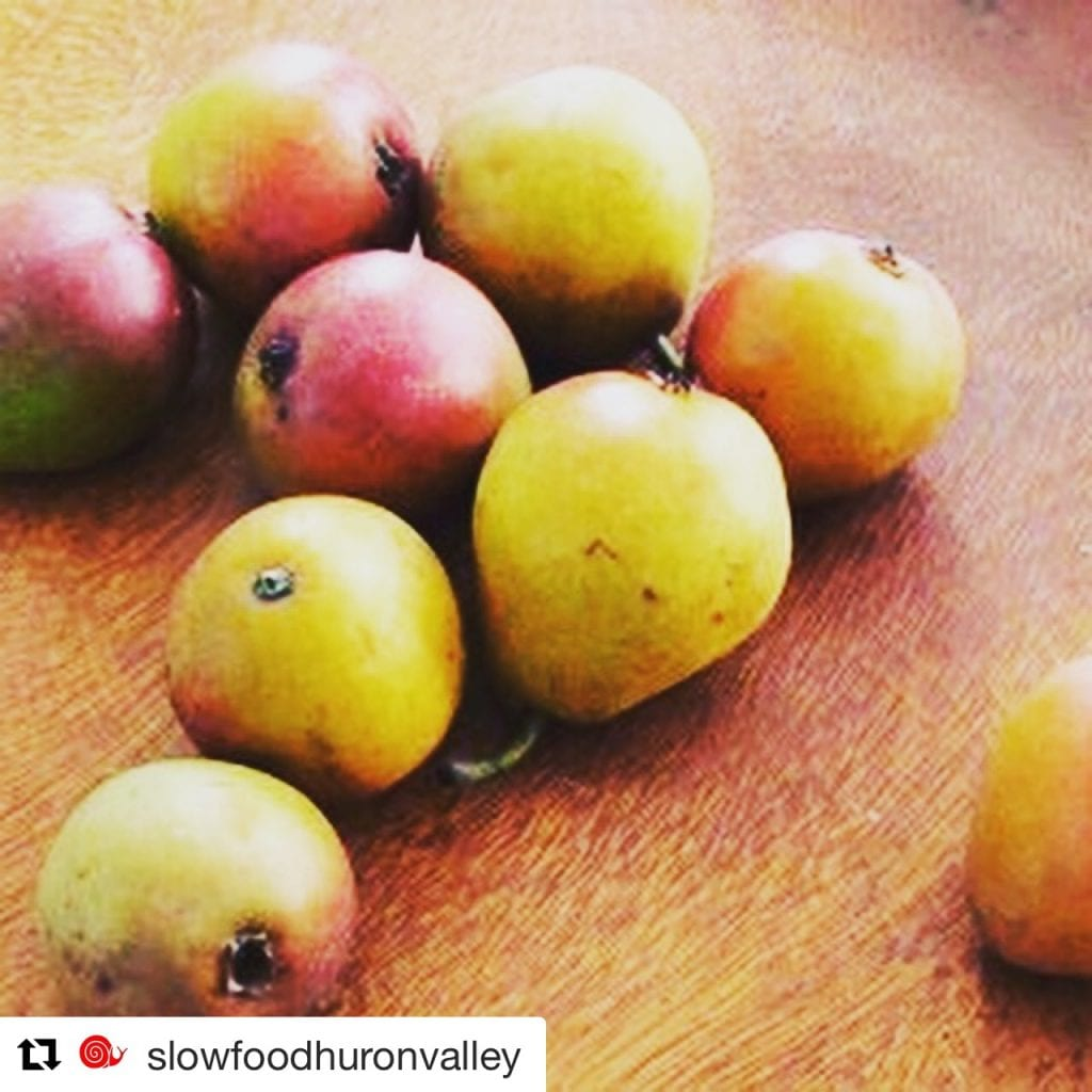 Image of Mission pears on table in a Slow Food Huron Valley post